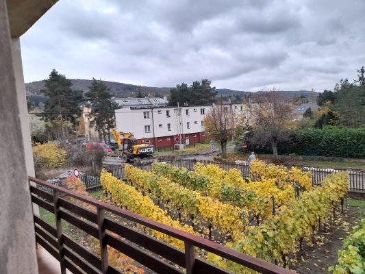 Dobřichovická vinička ve své podzimní kráse | foto: Zdeňka Vlčanová
