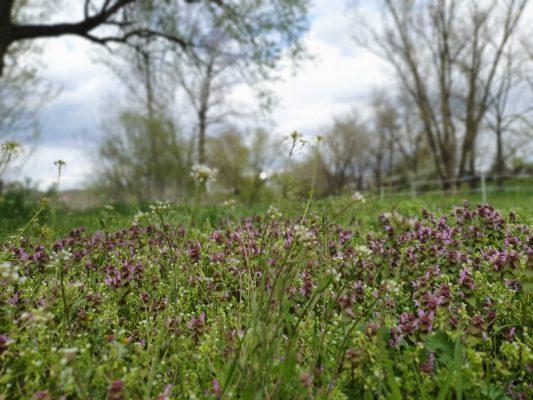 Jarní nálada | foto: Zorka Fröhlichová