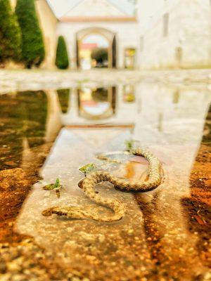 Had na nádvoří | foto: Ema Tichá