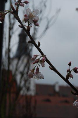 jaro na zámku 2 | foto: Jiří Krombholz