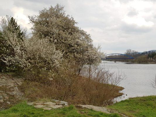 Pohled od řeky   foto: Libuše Černá